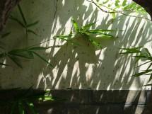 Im Garten Shihu Yuan 十芴园, Weifang, Provinz Shandong (2009)