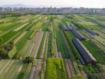 Bauernvillen und Baumschulfelder nahe dem Flughafen von Hangzhou, Provinz Zhejiang (2012)
