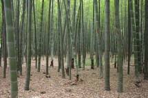 Bambuswald am Jadequell 玉泉, Hangzhou (2013)