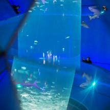 Blick durch ein Spiegel-Guckloch im großen Aquarium des Ocean Park (2015)