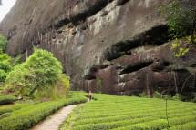Teeplantage, Wuyi Shan (2017)