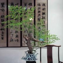 Im Gartenrestaurant Longjing Caotang 龙井草堂 in Hangzhou, Provinz Zhejiang (2012)